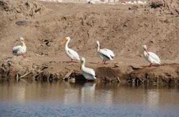 Sigue rescate de lagunas en Mexicali