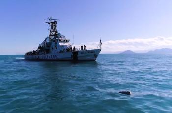 Reportan hallazgo de restos de vaquita víctima de red totoabera